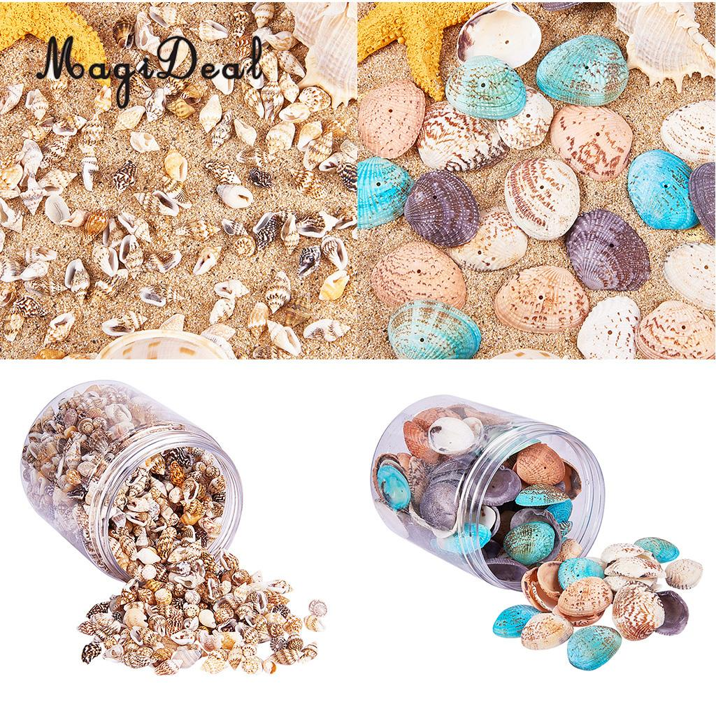 2 Box Multi Sea Shells Natural Conch Shells Beach Seashells, Colorful Assorted Accents for Candle Making Home Decorations