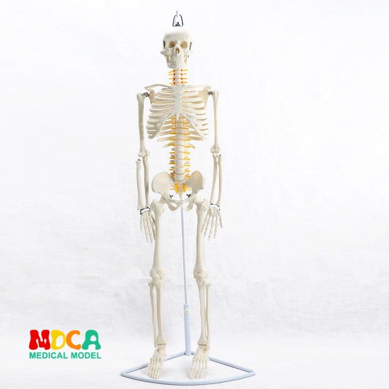 85CM Hanging type human. skeleton spinal nerve model medical Yoga Fitness learning bone model MGG202