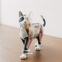 4D MASTER Cow Cat Anatomy Teaching Models Puzzle Assembly OriginalFake Plastic Action Figure Collectible Model Toy BOX T198