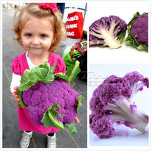 100+ Cauliflower Seeds- Sicilian Violet~ Vegetable