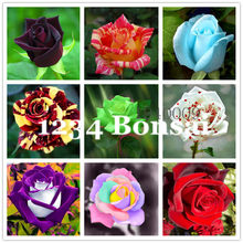 New Home Garden Plant Genuine Rose Xanthina,Black Thorn Plum ,Canary Bird Rose,Manchu Rose Tree bonsai Free Shipping 100 Pcs(China)