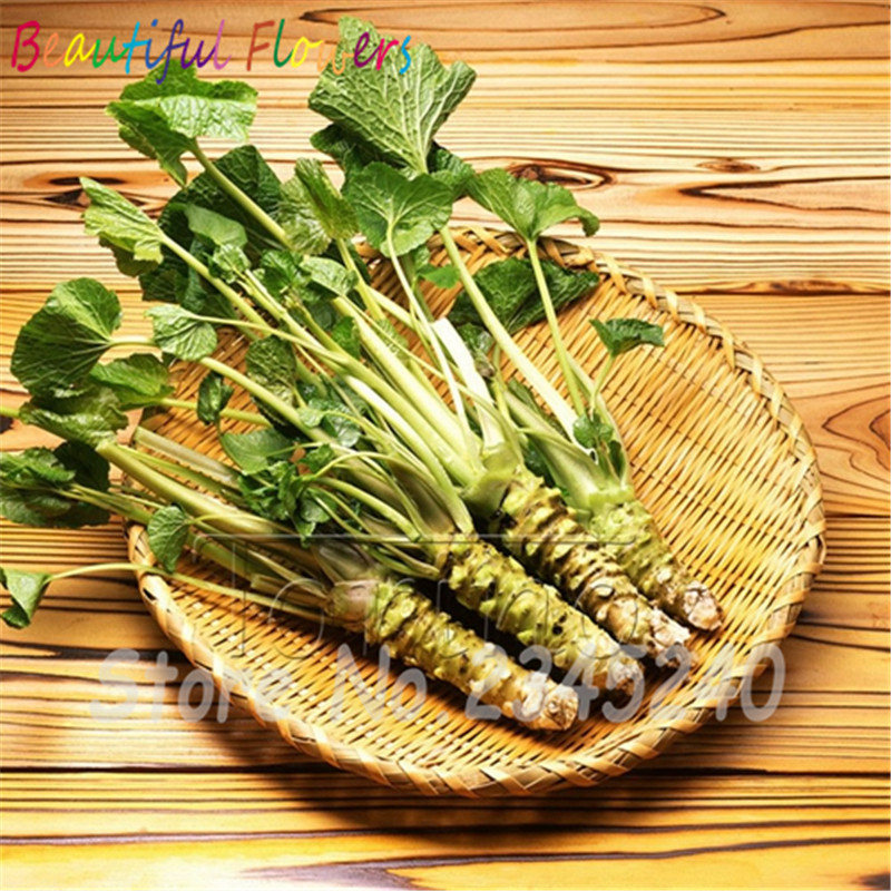 3.28 On Sale!!!100pcs/lot Wasabi Seeds, Japanese Horseradish Seed Vegetable  Seeds Bonsai Plant DIY Home Garden Plants Bonsai