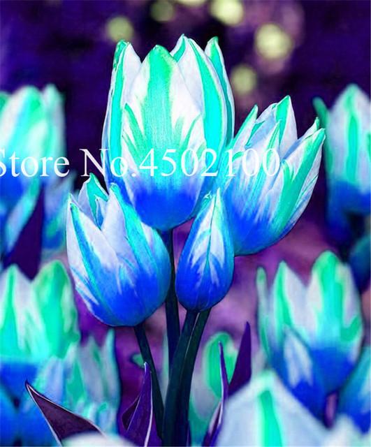 200 Pcs Multifarious Tulip Flowers Bonsai, Perennial Garden Flowers (Not Tulip Bulb) Herbs Plants For Home Symbolizes Love