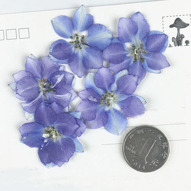 Larkspur Weiß/Blau Probe getrocknete blumen press natur blume DIY handmande floral Kostenloser Versand-in Künstliche & getrockneten Blumen aus Heim und Garten bei  Gruppe 2