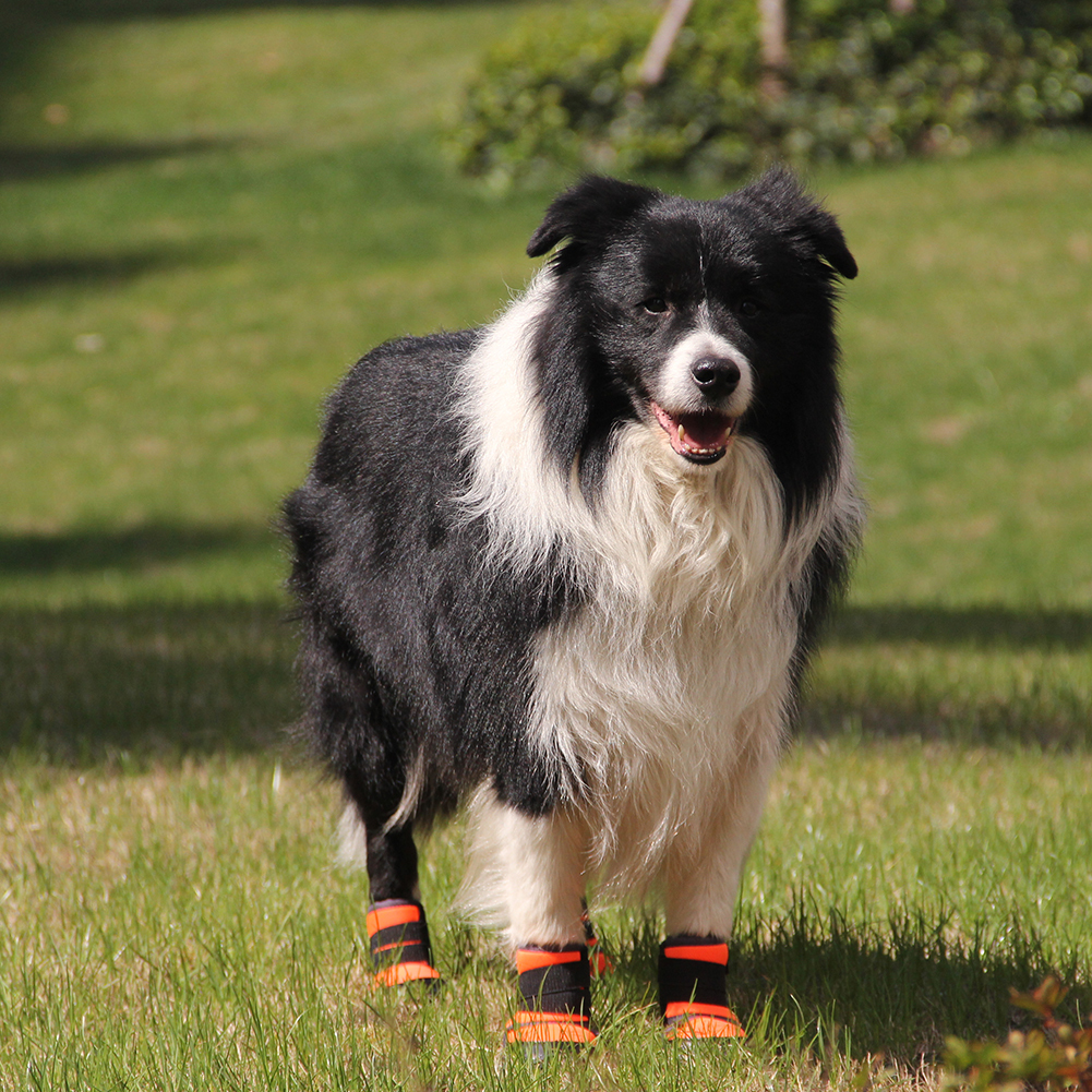 2019 tênis para cachorro de tamanho pequeno,