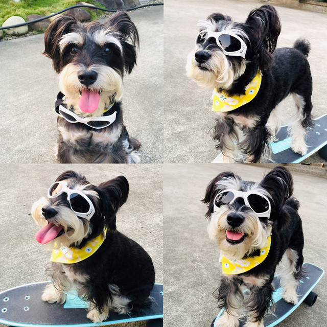 Foldable Sunglasses For Dogs 2