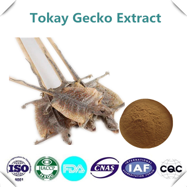 supply with best price tokay gecko extract 10 1 powder in braces