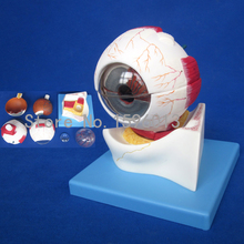 Estrutura do globo ocular modelo ampliado, estrutura do modelo de globo ocular, Modelo anatômico Olho