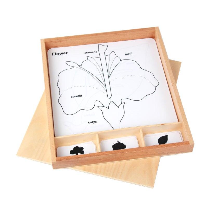 Bois Montessori langue matériaux 3 pièces carte botanique croissance cartes apprentissage Juguetes Montessori matériaux préscolaire E2864H