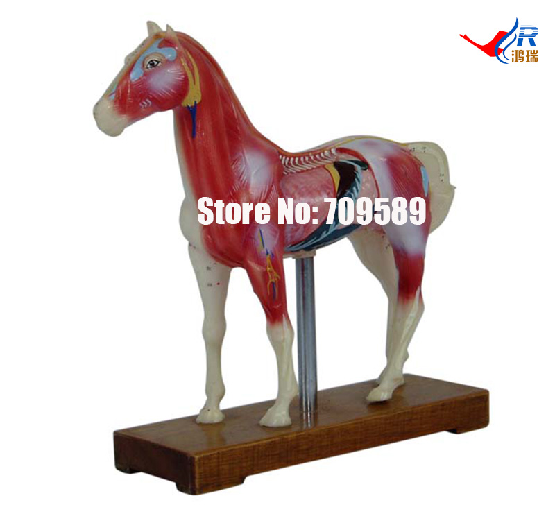 Horse Acupuncture Model, Animal Acupuncture Model dog acupuncture model animal acupuncture model