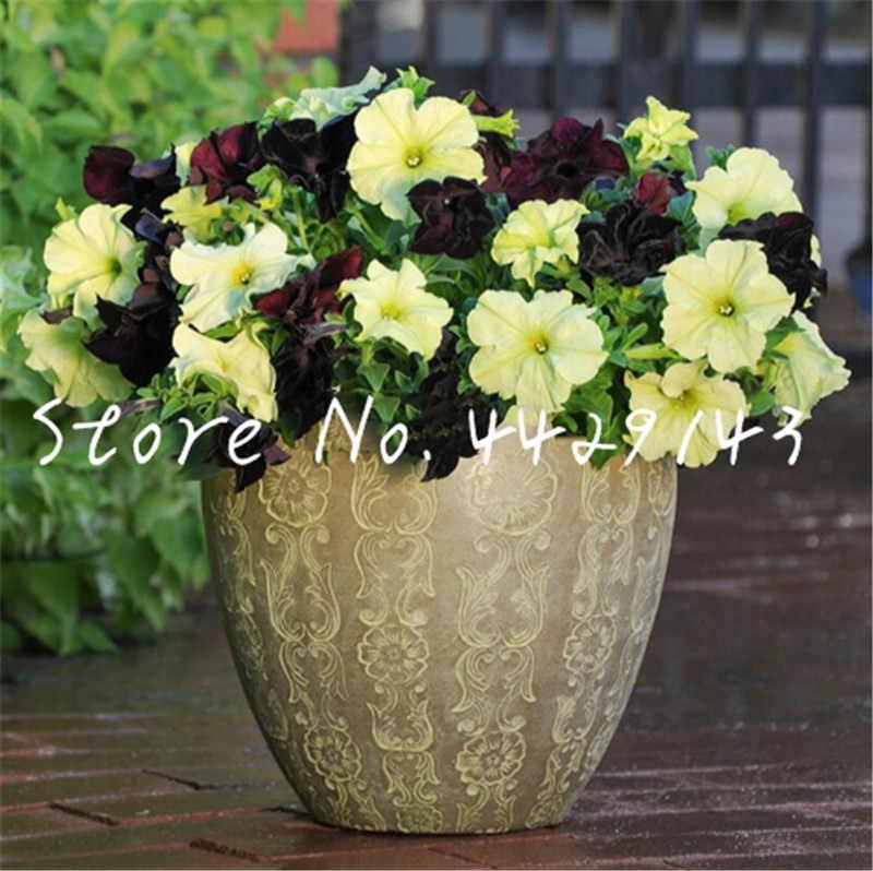 Grande promozione! 100 pcs di fiori di Petunia, Petunia di Notte del fiore del Cielo Plantas, bonsai fiore floresling piante acquatiche, piante da giardino
