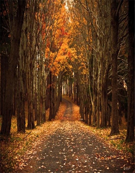8x10ft Autumn Forest Road Photography Backdrop Photo Studio Props Scenery Background XCFU390