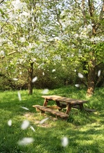 Laeacco Park Spring Trees Flower Petal Bench Scenic  Photography Backgrounds Customized Photographic Backdrops For Photo Studio 10x10ft 3x3m scenic muslin backgrounds photography photo studio backdrops hand painted flower muslin backdrop wedding