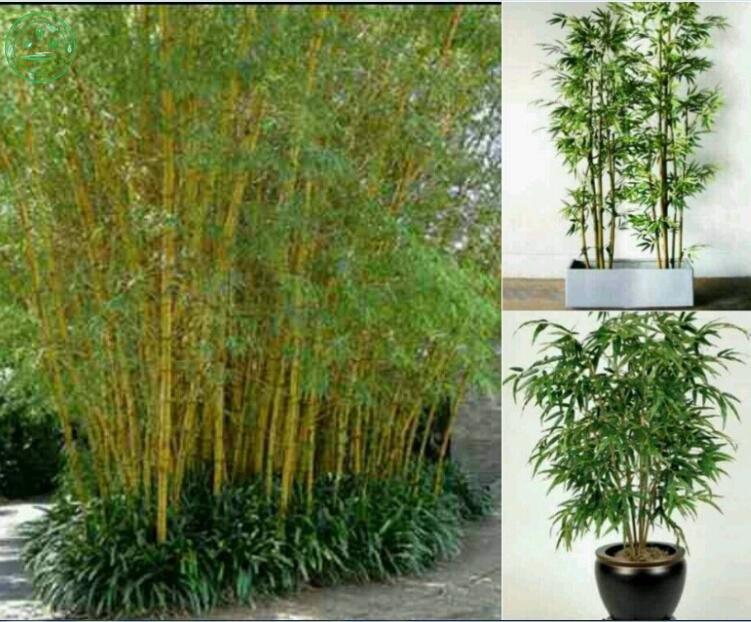 Bamboo garden columbus coupons - Coupon cash back