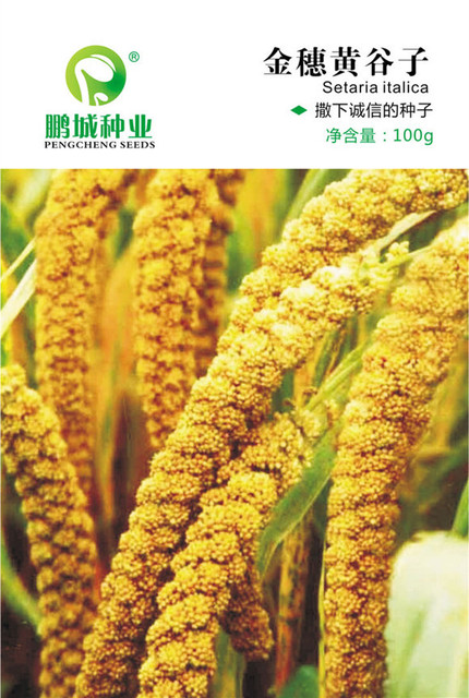 grain seeds jin sui yellow millet seeds yellow millet high yield of grain and food plants