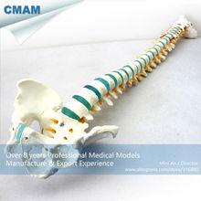 CMAM-SPINE04 Flexible 29″ Tall Medical Skeleton Models Vertebral Column with Pelvis