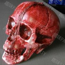 Skeleton Head Modeling Resin Skeleton Head Skull Halloween Props Home Furnishing Decoration