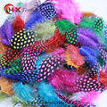 Sale 50pcs / lot cheap small Chicken pheasant feathers beautiful gull feather plume decoration accessories