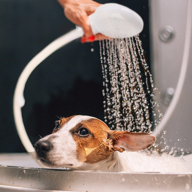 New Pet Dog Cat Shower Head Multi-functional Tap Faucet Spray Drains Strainer Hose Sink Washing Hair Pets Lave Water Bath Heads