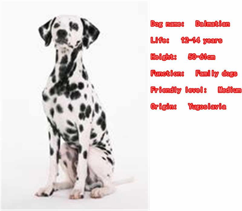 2018 น่ารัก Dalmatian สร้อยคอสุนัขสัตว์จี้เงินเครื่องประดับสำหรับสุภาพสตรีชายหญิงหญิงสุภาพสตรีเด็ก N077