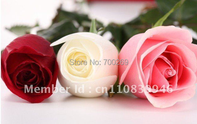 Wholesale - -800 China Rare Rose seeds Red Yellow White Red Black Green Purple Blue Flower Lover's Gift  Free shipping