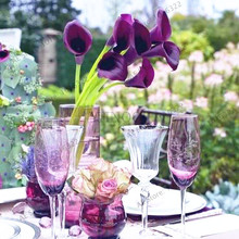Calla lily seeds 100 pcs rare flower seeds for home garden planting, perennial flowers bonsai plant for home garden.