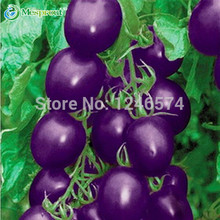 Free Shipping Purple Tomato/1 Pack 20 Seeds Vegetable Seed Healthy Green Food