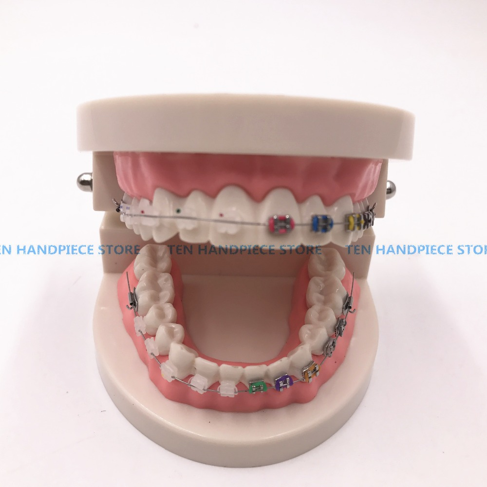 2018 Orthodontics Model for Dentist Dental 1/2 Standard Dentition with half Metal Brackets half ceramic bracket Teeth Model tesoura de tosa fenice