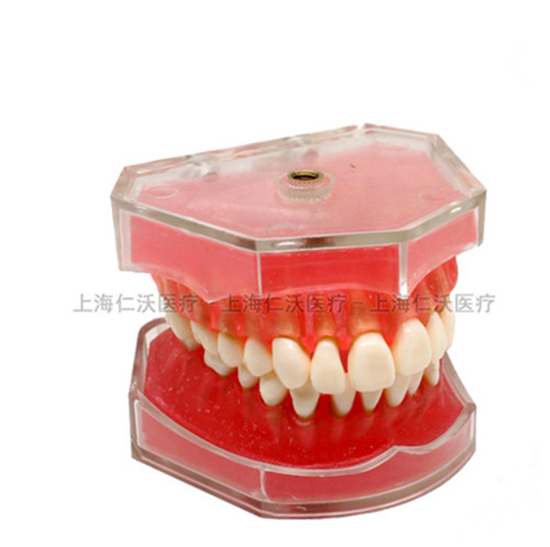 Various-Dental-Teeth-Models-Are-Used-For-Teaching-And-Hospital-Dentist-Material.jpg_640x640_
