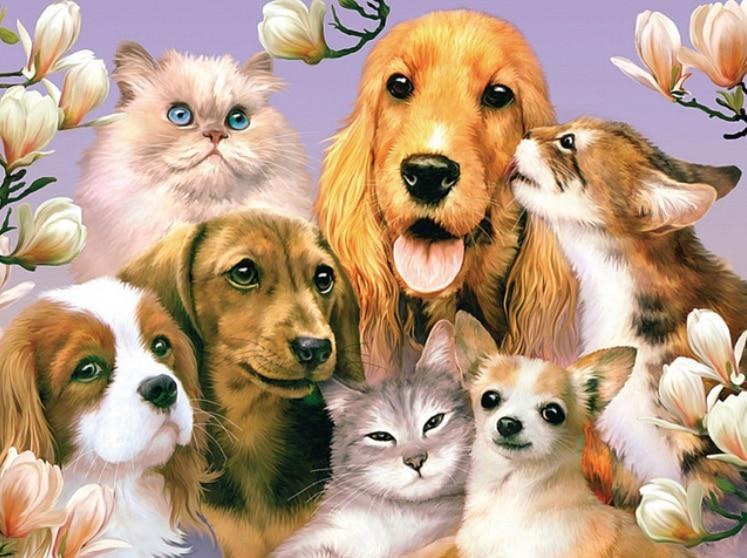 цветные картинки собак и кошек подходит