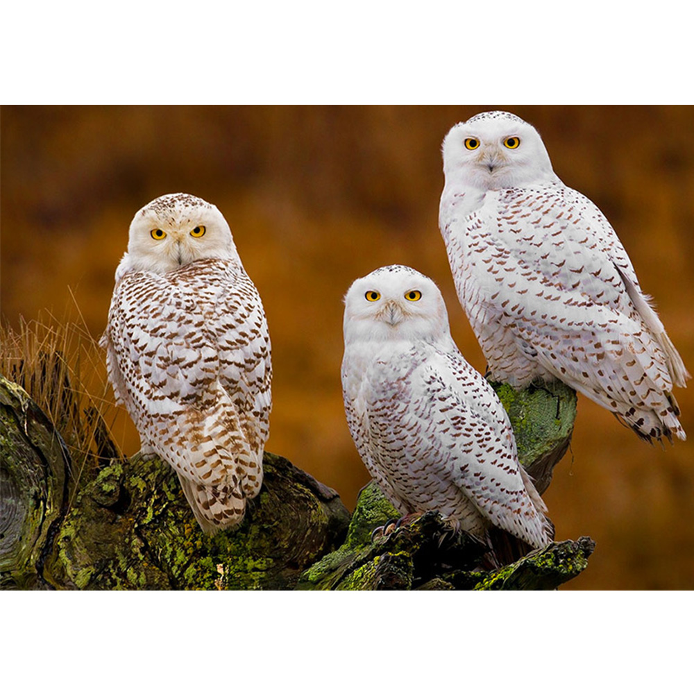 New Full Diamond Painting Three white owl Diamond Embroidery Animal Diy Diamond Mosaic Rhinestones Picture Needle Arts Craft