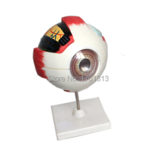 Модель глазного яблока диаметр 15 см специальное украшение клиника персонализированные декоративные фигурки биология офтальмология доктор