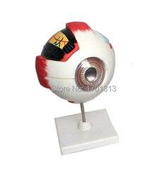Globo ocular modelo diâmetro 15 cm decoração especial clínica personalizado estatuetas decorativas biologia oftalmologia médico