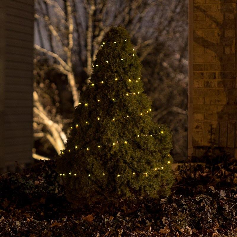 sfl-ww10c-sp-wrapped-around-tree