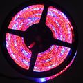 5M/16.4ft DC12V IP65 Epoxy Resin Waterproof 5050SMD 60LED/M 5 Red 1 Blue 5:1 Mix Color Plant Grow Aquarium Flexible LED Strip