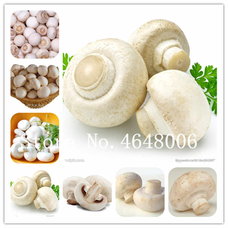 Sale! 200 Pcs Delicious White Mushroom Bonsai, Green Vegetables Organic Funny Succulent Happy Farm Plant Easy To Grow For Home