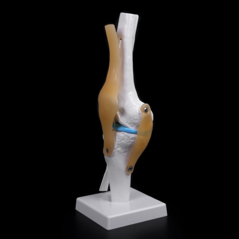 Medical Props Model Human Anatomical Knee Joint Flexible Skeleton Model Medical Learning Aid Anatomy