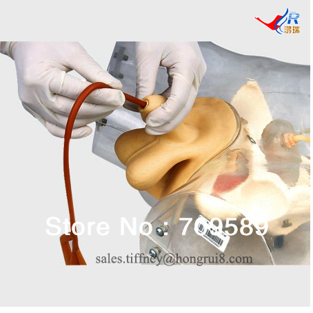 купить Advanced Transparent Male Urethral Catheterization Simulator, Urinary Catheterization model