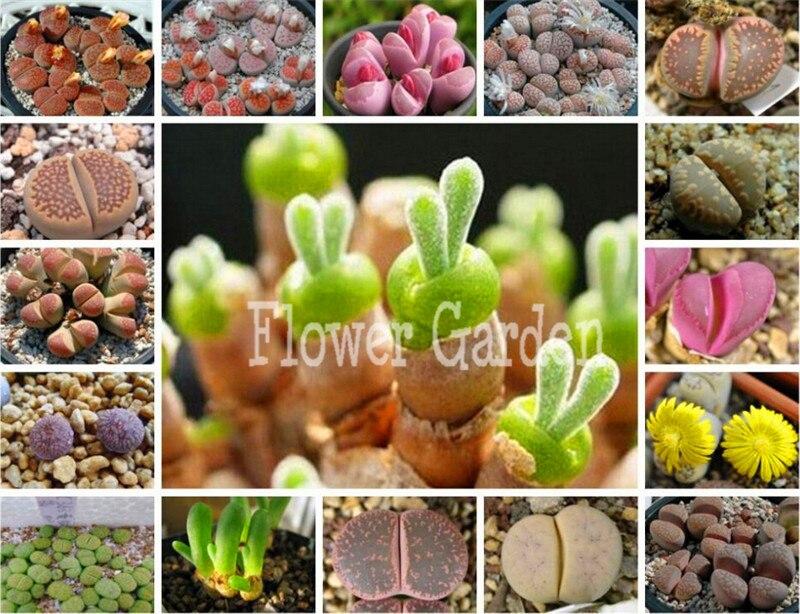 Popular Bulk Organic Seeds Buy Cheap Bulk Organic Seeds lots from