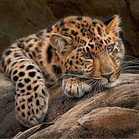 30 30 Cm 5D DIY Diamond Magic Painting Cross Stitch Lovely Leopard Resin With Drill Painting