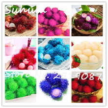 Hot!!!30seeds/bag Blue Rambutan Seed Malaysia Miracle Mix Colors Rambutan Fruit Seeds As Litchi Seed Delicious Plant Tree Seeds