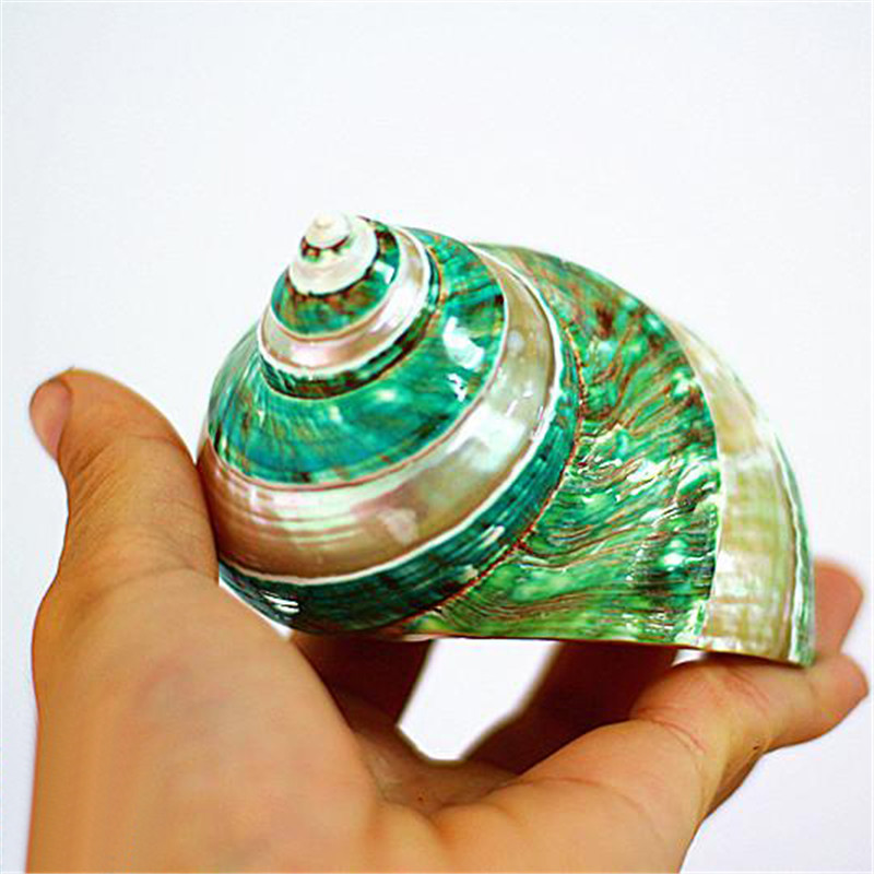 Polishing Stripe Green Turban Natural Shell & Conch Fish Tank Aquarium Landscaping Ornaments Wedding Home Decoration Great Gift