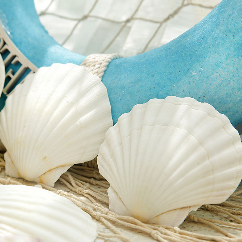 свойством ракушки средиземного моря названия и фото протокола