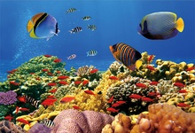Laeacco Sea Underwater Fish Coral Shell Photography Backdrops Customized Photographic Backgrounds For Photo Studio