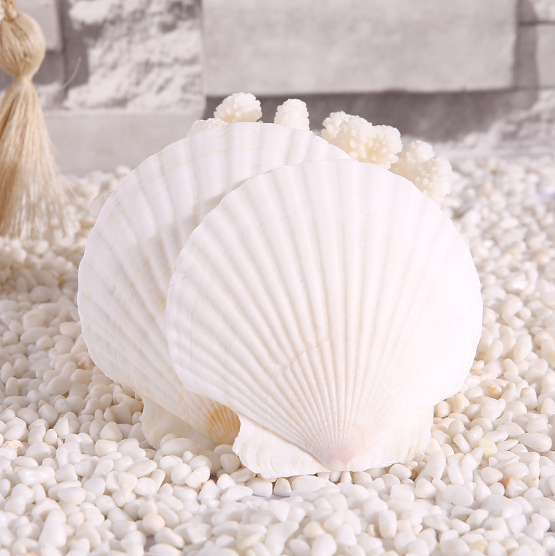 AIBEI 10 15CM Natural White Seashell 3PCS/LOT Large Scallops Wall Stickers  Aquarium
