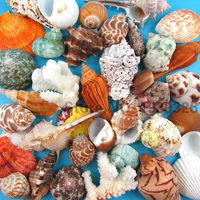 Natural Beach Sea Shells Conch Coral Decorative Seashells Concha Crafts Fish Tank Aquarium Decoration Nautical Home Decor 1-10cm