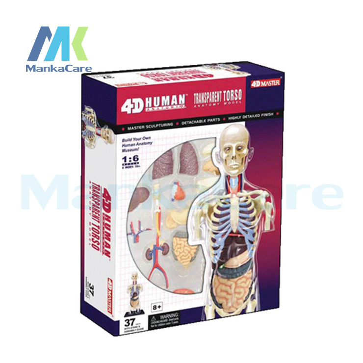 1pcs human body 4d skeleton anatomy skull manikin heart anatomy life size ear model educational puzzle kids medical science toys 4D Master Human Body transparent Anatomy Skull Manikin Heart Anatomy Model Puzzle Medical Science Doll Toys Educational Assemble