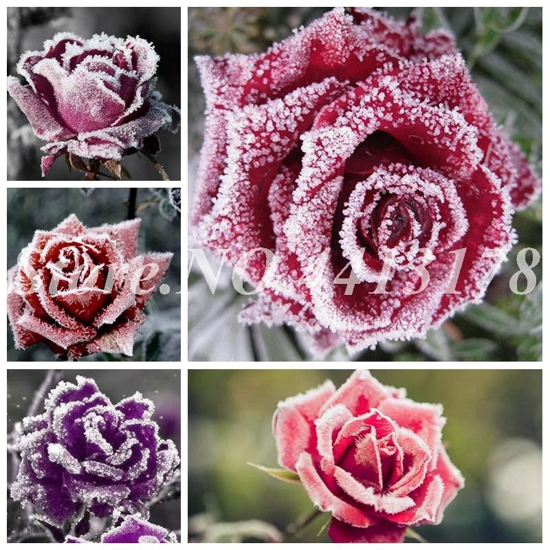 1-6X Miniature Dollhouse Simulation Flower Rose Fairy Garden DIY Bonsai Nice L/_D