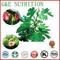 Fig leaf extract, olive leaf extracts, bilberry leaf extracts   10:1  700g