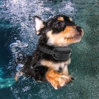 500 متر بعيد كلب قابلة للتعديل ip67 للماء الكلب التدريب الياقة صدمة كهربائية الياقات (us الاتحاد الافريقي المكونات)
